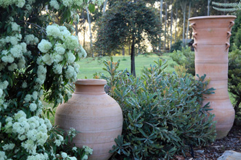 Grecian Urn Espaniko and Bogiazopitharo gracing a formal garden setting.